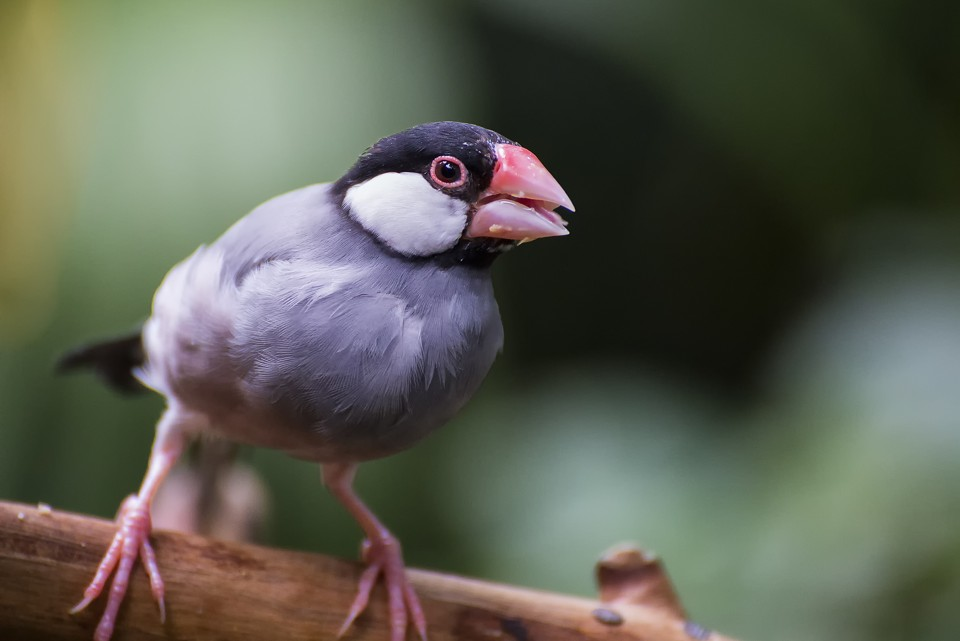 sparrowbeak