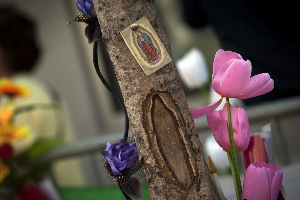 Flowers and prayer cards are pinned to a tree with a scar that residents claim looks like Our Lady of Guadalupe, a Mexican representation of the Virgin Mary, in West New York, New Jersey July 14, 2012. Hundreds of onlookers have gathered daily around makeshift shrines at the base of the tree in the New Jersey town across the Hudson River. REUTERS/Keith Bedford (UNITED STATES - Tags: RELIGION SOCIETY ENVIRONMENT) - RTR34Y6Y